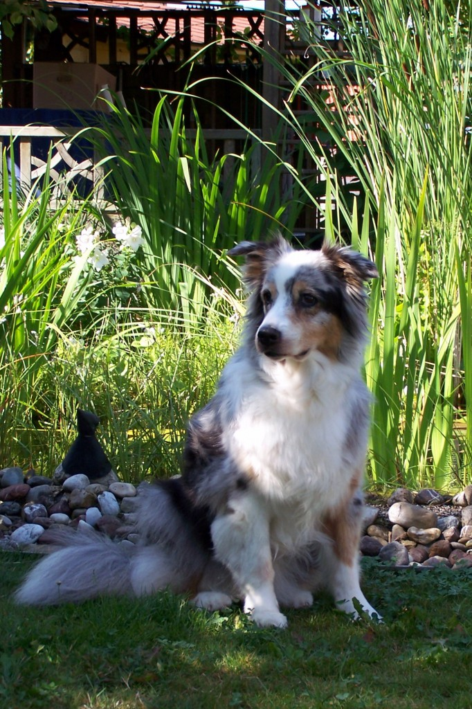 Cheyenne an ihrem 13. Geburtstag